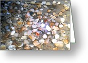 Shells Mixed Media Greeting Cards - Sea Shells Greeting Card by Evelyn Patrick