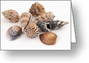 Shell Texture Greeting Cards - Sea Shells on White Greeting Card by Robert Gebbie