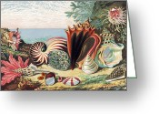 Sea Shell Art Greeting Cards - Sea Shells Greeting Card by Sheila Terry