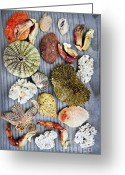 Marine Life Greeting Cards - Sea treasures Greeting Card by Elena Elisseeva