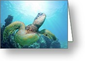 Pacific Islands Greeting Cards - Sea Turtle And Coral Reef Greeting Card by Monica and Michael Sweet