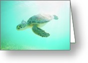 Swimming Photo Greeting Cards - Sea Turtle Baby Greeting Card by Monica and Michael Sweet