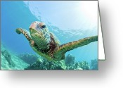 Pacific Islands Greeting Cards - Sea Turtle, Hawaii Greeting Card by M.M. Sweet