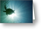 Endangered Species Greeting Cards - Sea Turtle Greeting Card by M.M. Sweet