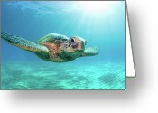 Swimming Greeting Cards - Sea Turtle Greeting Card by Monica and Michael Sweet