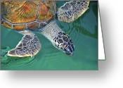 Swimming Photo Greeting Cards - Sea Turtle Greeting Card by Thank you.