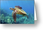 Side View  Greeting Cards - Sea Turtle Underwater Greeting Card by M.M. Sweet