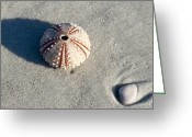 Beach Scenery Photo Greeting Cards - Sea Urchin and Shell Greeting Card by Kenneth Albin