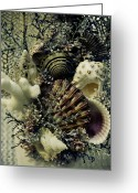 Flower Show Greeting Cards - Sea You Greeting Card by Andrew Kubica