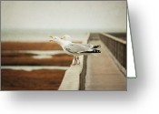 The Edge Greeting Cards - Seagul Greeting Card by Lucy Loomis, Photographer