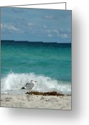 South Beach Greeting Cards - Seagull - South Beach Miami Greeting Card by Frank Mari