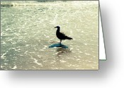 Beach Scenery Photo Greeting Cards - Seagull Greeting Card by Ariane Moshayedi