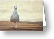 Camera Greeting Cards - Seagull Greeting Card by by Juanedc
