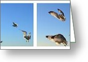 Seagull Photo Greeting Cards - Seagull Collage Greeting Card by Michelle Calkins
