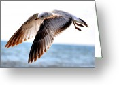 Beaches Greeting Cards - Seagull Cruise Greeting Card by Emily Stauring