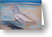 Miami Drawings Greeting Cards - Seagull Greeting Card by Eric  Schiabor