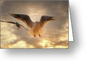 Wild Bird Greeting Cards - Seagull Greeting Card by GilG Photographie