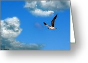 Baptize Greeting Cards - Seagull in Flight Greeting Card by Jeff Stein