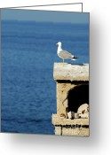 Contemplation Greeting Cards - Seagull overlooking Mediterranean sea Greeting Card by Sami Sarkis