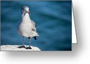 Stout Greeting Cards - Seagull Greeting Card by Ralf Kaiser