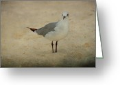 Panama City Beach Greeting Cards - Seagull Greeting Card by Sandy Keeton