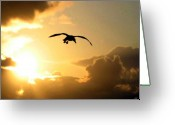 Seagull Photo Greeting Cards - Seagull Silhouette Greeting Card by Will Borden