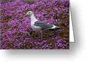 Seagull Photo Greeting Cards - Seagull standing among flowers Greeting Card by Garry Gay