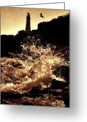Nubble Greeting Cards - Seagull Takeoff Greeting Card by Emily Stauring