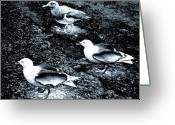 Oregon Wildlife Digital Art Greeting Cards - Seagull Trio Greeting Card by Will Borden