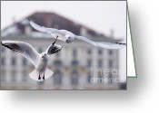 Nymphenburg Greeting Cards - Seagulls at Nymphenburg Palace Greeting Card by Andrew  Michael