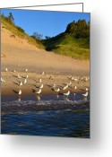 Dune Grass Greeting Cards - Seagulls at the Bowl Greeting Card by Michelle Calkins