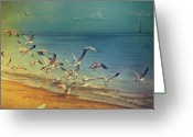 Tranquil Scene Greeting Cards - Seagulls Flying Greeting Card by Istvan Kadar Photography