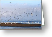 Seagull Photo Greeting Cards - Seagulls I Greeting Card by Svetlana Sewell