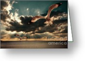 Seagulls Greeting Cards - Seagulls In A Grunge Style Greeting Card by Meirion Matthias