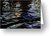 Seagull Photo Greeting Cards - Seagulls in flight abstract Greeting Card by Dean Harte