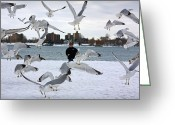 Feeding Greeting Cards - Seagulls In Flight Greeting Card by Gordon Dean II