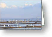 Seagull Photo Greeting Cards - Seagulls on a Beach Greeting Card by Svetlana Sewell