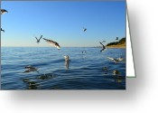 Sea Birds Greeting Cards - Seagulls over Lake Michigan Greeting Card by Michelle Calkins