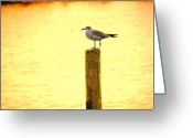 Sea Scape  Greeting Cards - Seagulls Sunset Greeting Card by Laura Brightwood