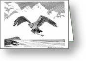 Eagle Drawings Greeting Cards - Seahawk dinnertime Greeting Card by Jack Pumphrey