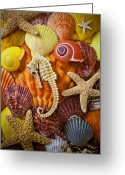 Seashells Greeting Cards - Seahorse and assorted sea shells Greeting Card by Garry Gay