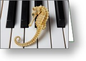 Pianos Greeting Cards - Seahorse on keys Greeting Card by Garry Gay