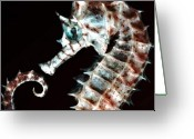 Sea Creature Greeting Cards - Seahorse Greeting Card by Tamara Stoneburner