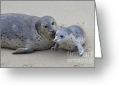 Cute Pyrography Greeting Cards - Seal Baby  Greeting Card by Judy Grant