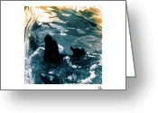 Metis Art Greeting Cards - seals II Greeting Card by Dan Daulby
