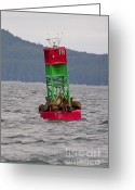 On-the-look-out Greeting Cards - Seals on the Bouy Greeting Card by Darcy Michaelchuk