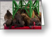 On-the-look-out Greeting Cards - Seals Warming Up Greeting Card by Darcy Michaelchuk