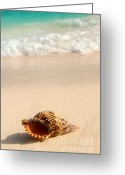Seashore Greeting Cards - Seashell and ocean wave Greeting Card by Elena Elisseeva