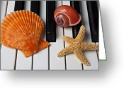 Composing Greeting Cards - Seashell and starfish on piano Greeting Card by Garry Gay