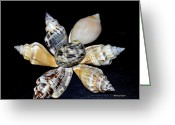 Seashell Art Greeting Cards - Seashell Floral Greeting Card by Maria Urso - Artist and Photographer